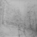 carita-savolainen-unknown-woods-i-pencil-on-paper-charcoal-veil-110cm-x-150cm-2016