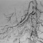carita-savolainen-wounded-tree-i-pencil-on-paper-100cm-x-70cm-2016